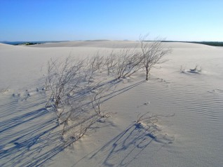 Dark Point Dunes, Hawks Nest